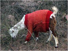 Mit einem Pullover bekleidet