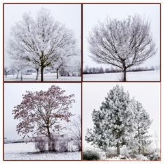 Mit Eiskristallen bedegte Bäume