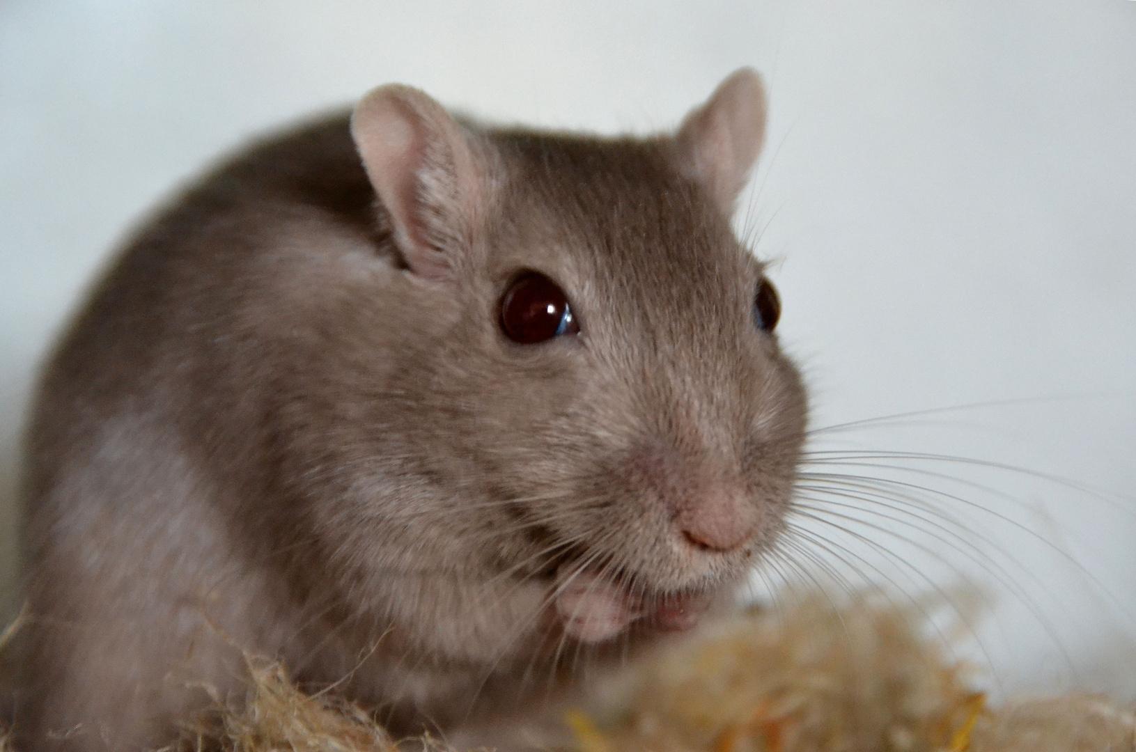 Mit Futter bekommt man auch mal die schnellen Mäuse vor die Linse (: