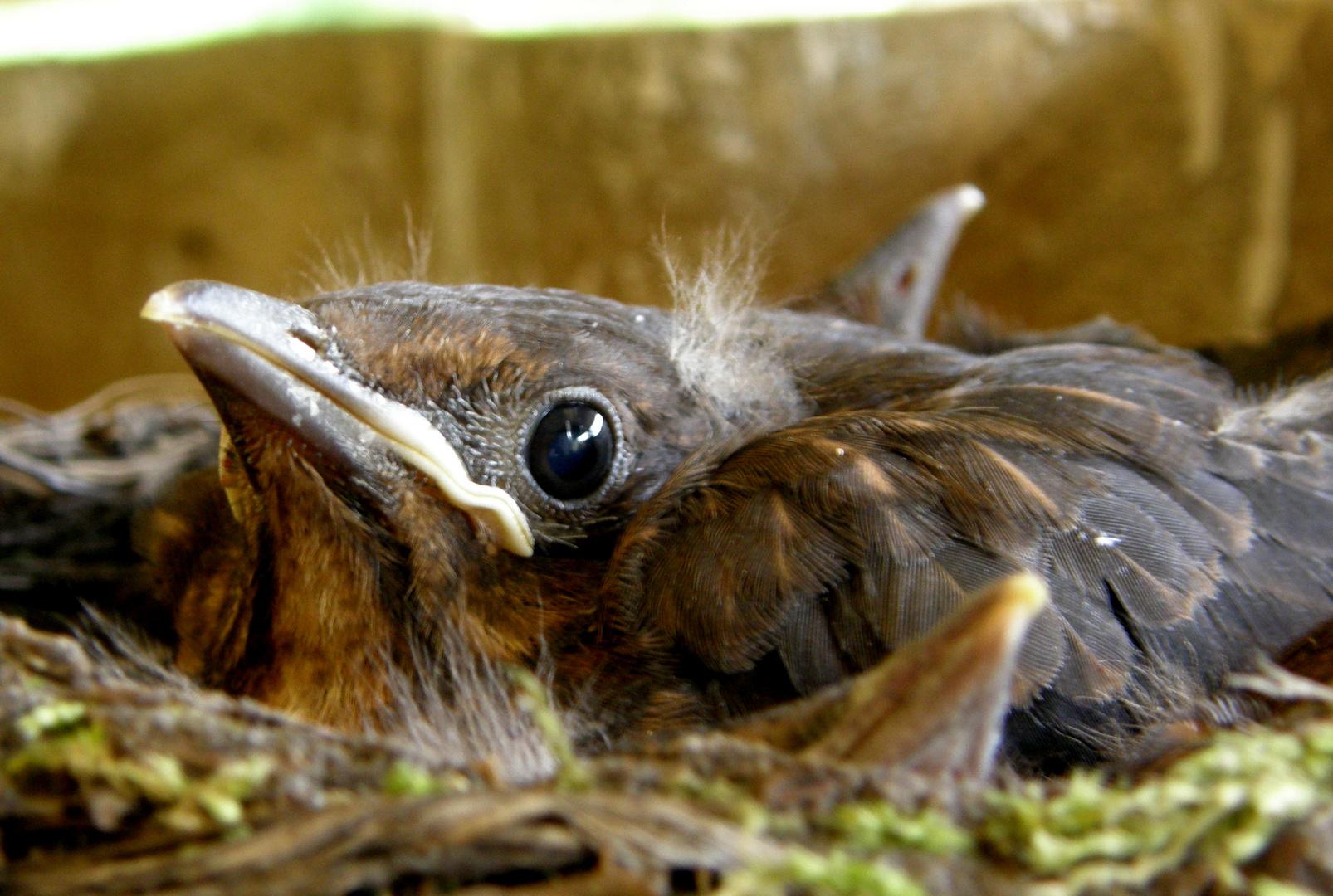 mit Geschwistern im Nest...