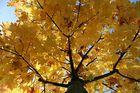 Mit Grüssen vom Herbst II