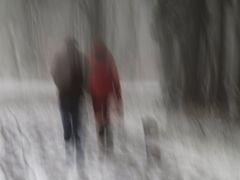 Mit Hund im verschneiten Wald