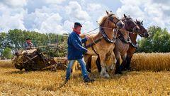 mit Pferden ernten