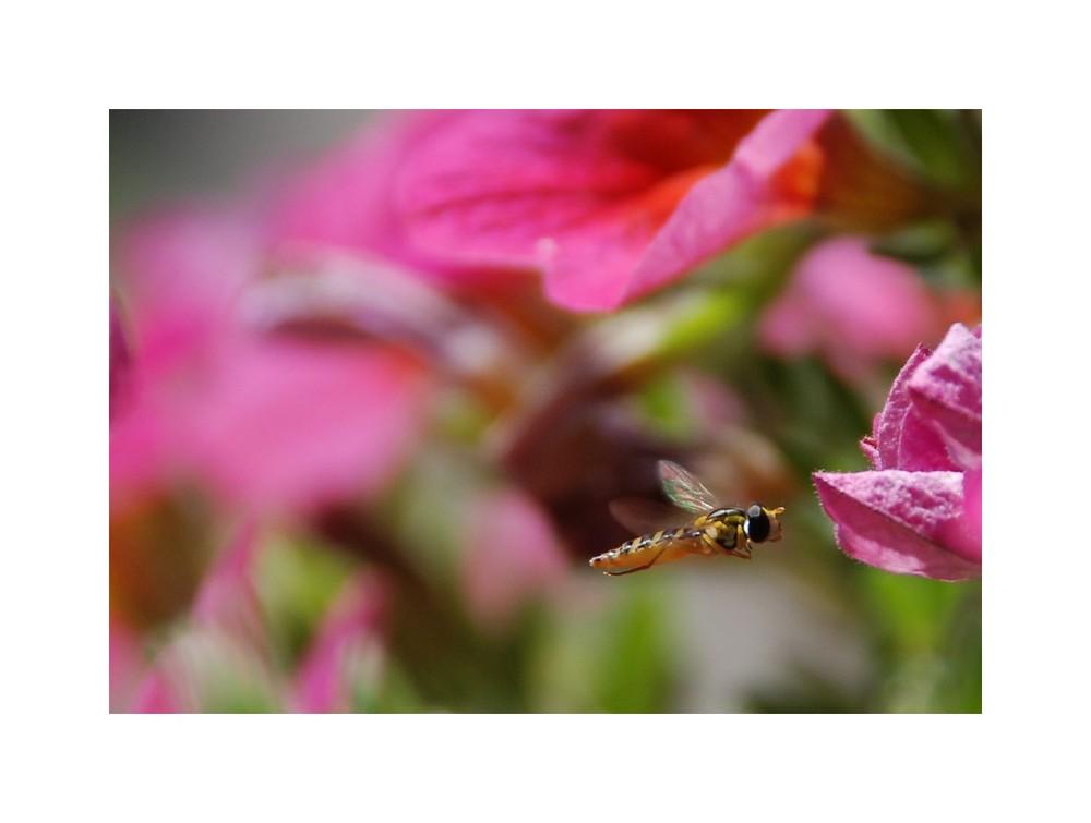 mit rahmen foto bild tiere wildlife insekten bilder auf fotocommunity. Black Bedroom Furniture Sets. Home Design Ideas