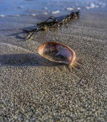 Mit Sand gefüllt