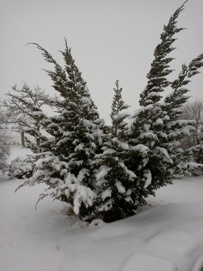 Mit Schnee bedeckt