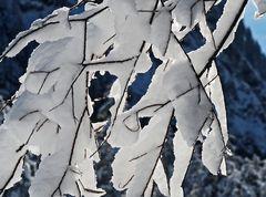 Mit Schnee geschmückt, von der Sonne berührt ... - Quand la neige manifeste son charme...