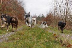 Mit Schwung ins Neue Jahr von Hundeschule Hundesache !!!