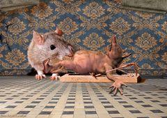 Mit Speck fängt man Mäuse
