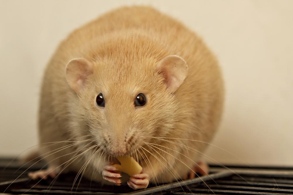 Mit Speck Fängt Man Mäuse Foto Bild Tiere Haustiere