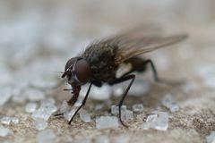 mit Speck fängt man Mäuse resp. mit Zucker Fliegen