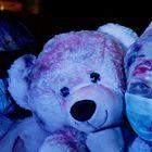 mit Teddy
