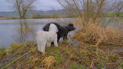 mit Wicky-Emily und Ronja am See (con Wicky-Emily y Roña en el lago)