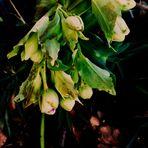 MIt zarten Blüten aus feuchter Erde wünsche ich Euch einen angenehmen Tag