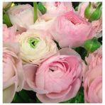 Mit zarten Blumen in den neuen Monat