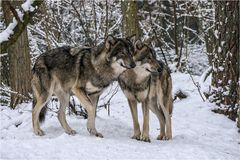 Mitja & Levi...