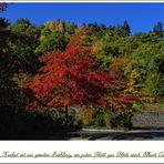 """Mitmach Aktion """"Zum Thema Herbst """""""
