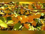 """Mitmachaktion: """"Herbst"""""""