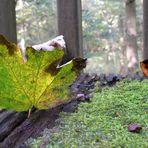 Mitmachaktion Herbst