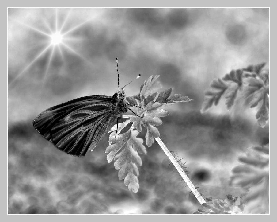 Mitmachaktion von Maike ...Schmetterling...