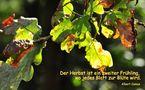 """Mitmachaktion zum Thema """"Herbst"""" von Schneeball"""