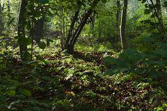 Mittags im Wald