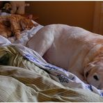Mittagsschlaf (siesta)