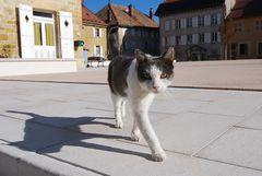 Mittelalter-Katze