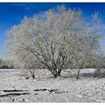 Mittellandkanal Winterlandschaft Januar 2010