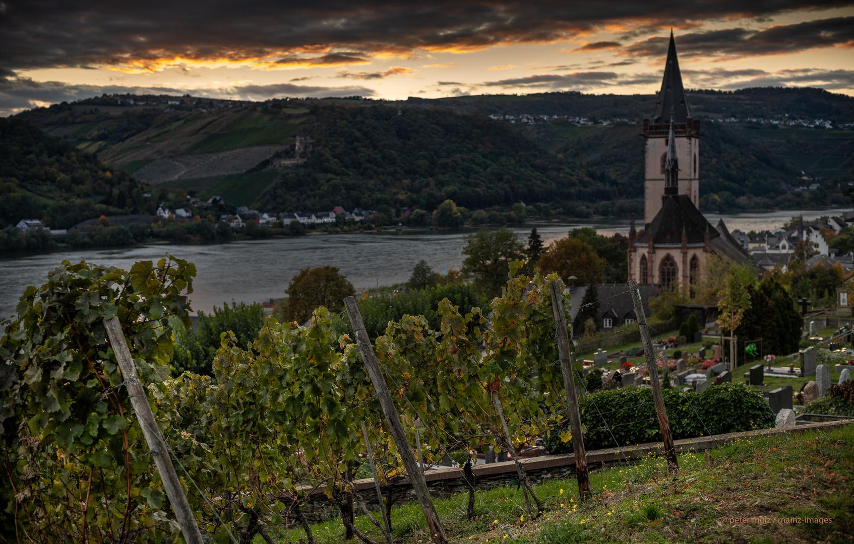 Mittelrheintal - herbstliche Abendstimmung über den Wingerten und dem Rhein bei Lorch