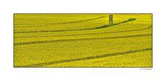 - mitten im Gelb -