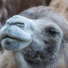 mitten im kamelgetümmel