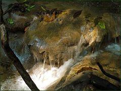 Mitten im Regenwald #2