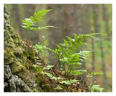 Mitten im Wald....