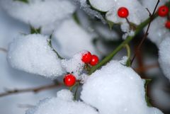 ...mitten im Winter...