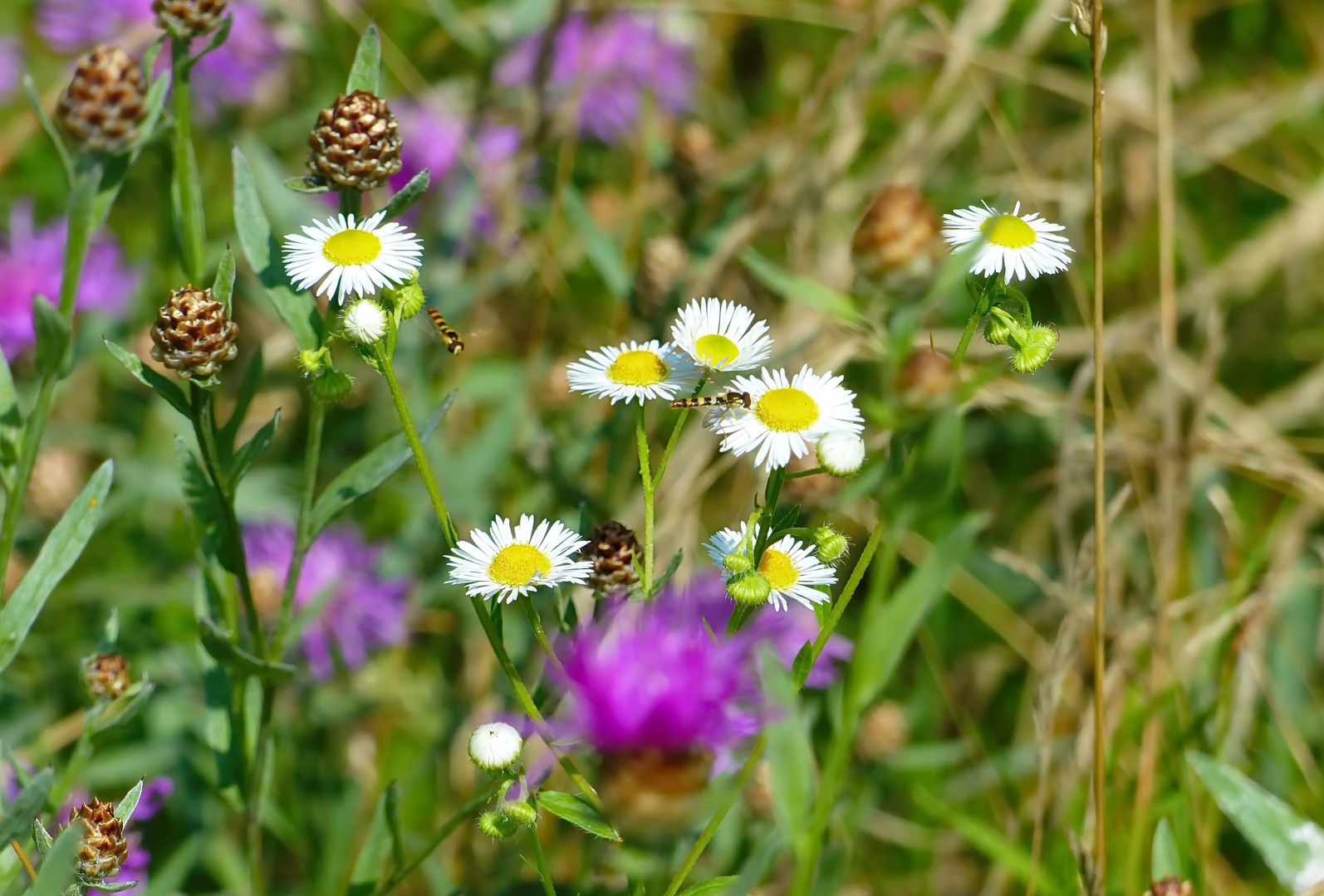 Mitten in der Blumenwiese     ( Mittwochsblümchen)