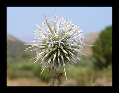 Mitten in der griechischen Wildnis