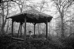 Mitten in einem Wald