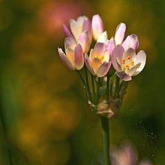 Mittgsblümchen 2