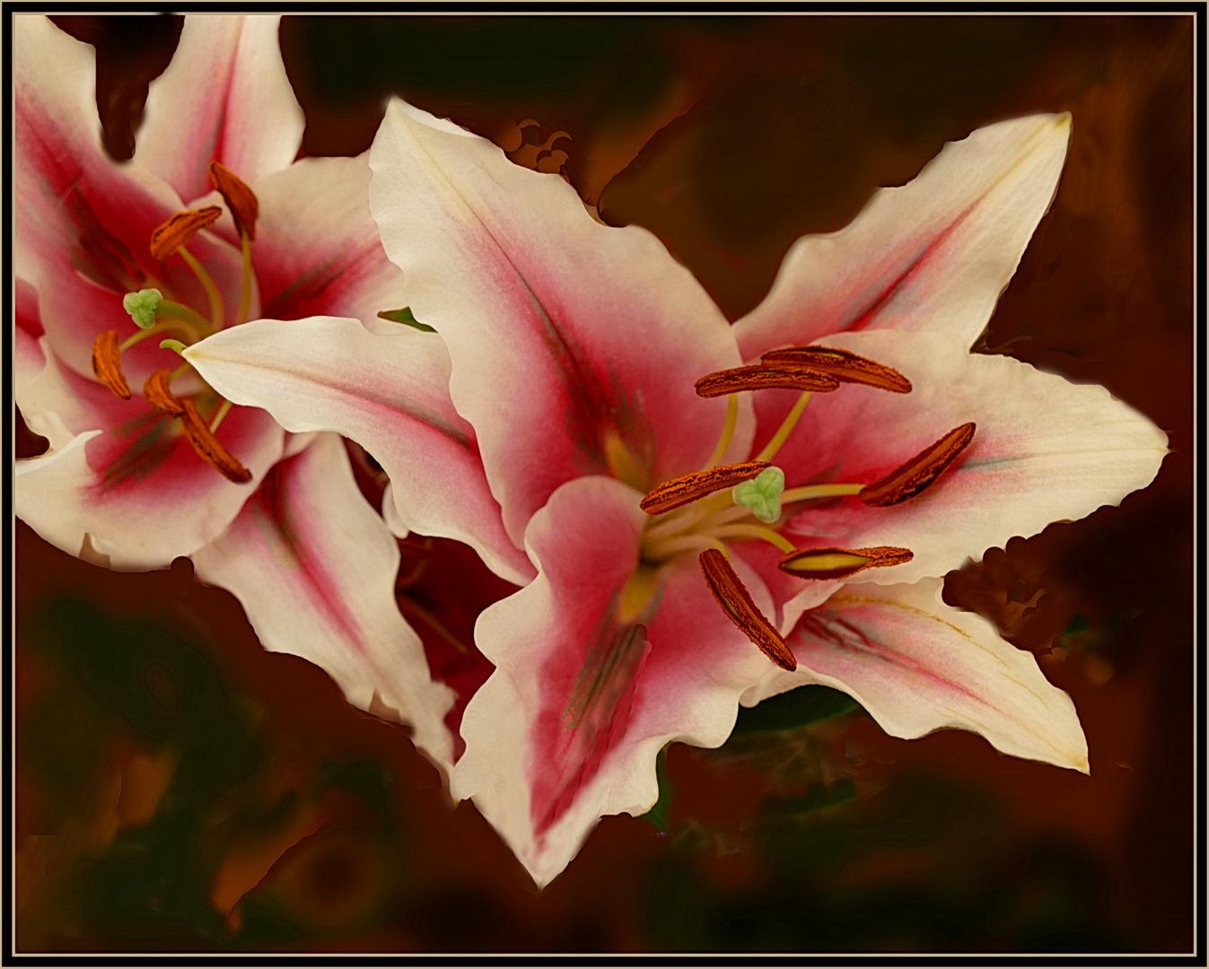 Mittwoch Blumen