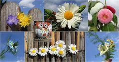 Mittwochblümchen an Euch