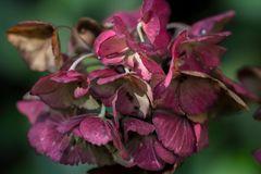 mittwochblümchen - das letzte aus dem garten