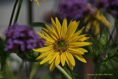 Mittwochs Blüte