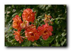 Mittwochs-Blumen