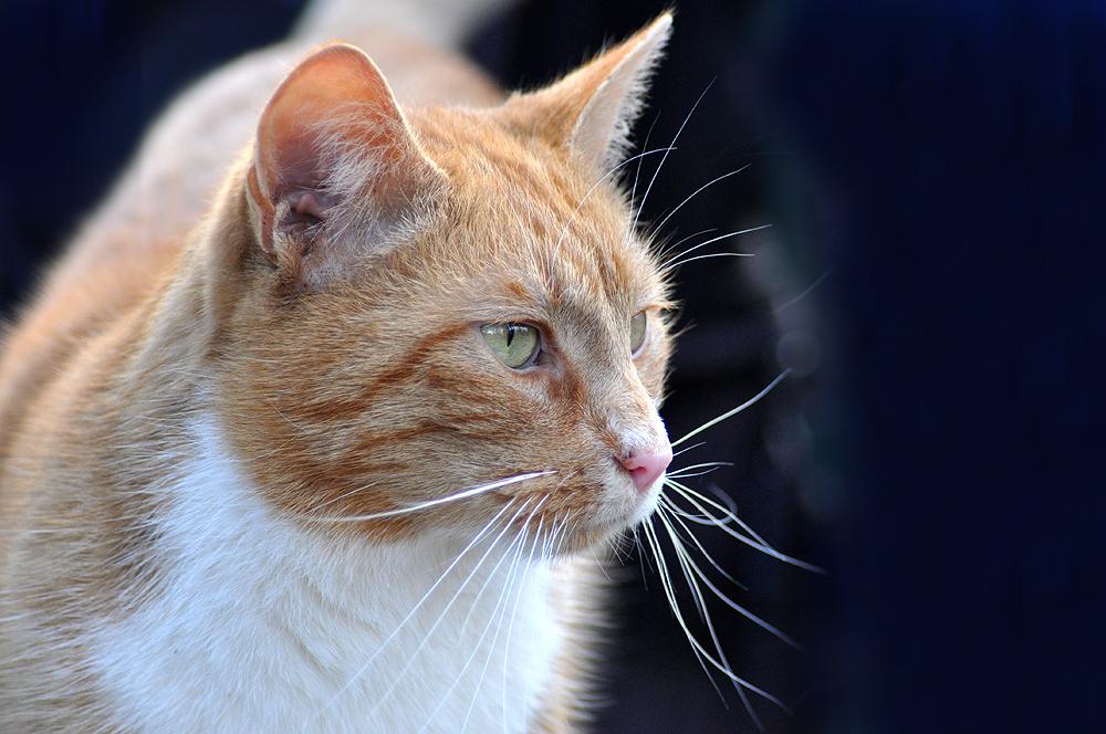 Mittwochs-Katze