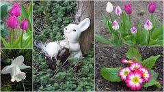 Mittwochs- Osterblümchen