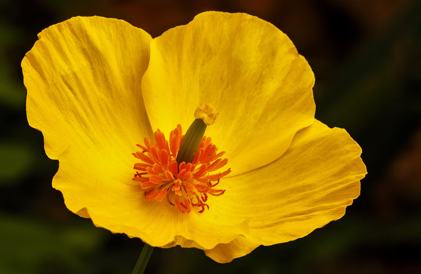 Mittwochsblümchen 001