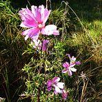 Mittwochsblümchen 1