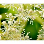 Mittwochsblümchen 12.05.21