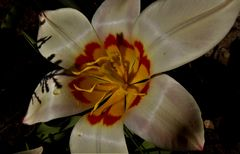 Mittwochsblümchen 2